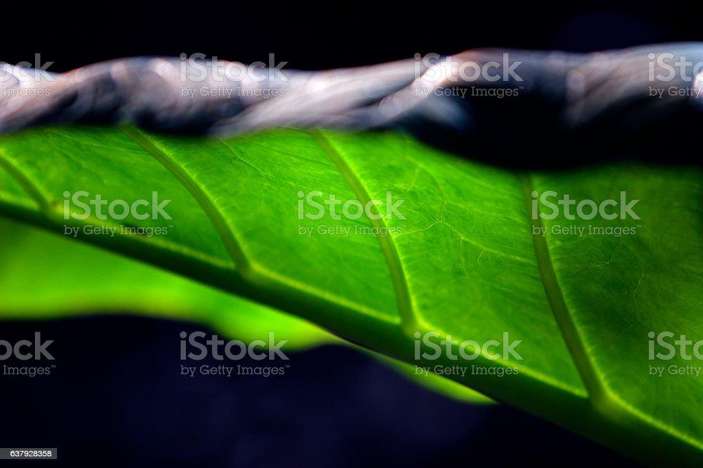 Big Tropical Leaf Plant stock photo