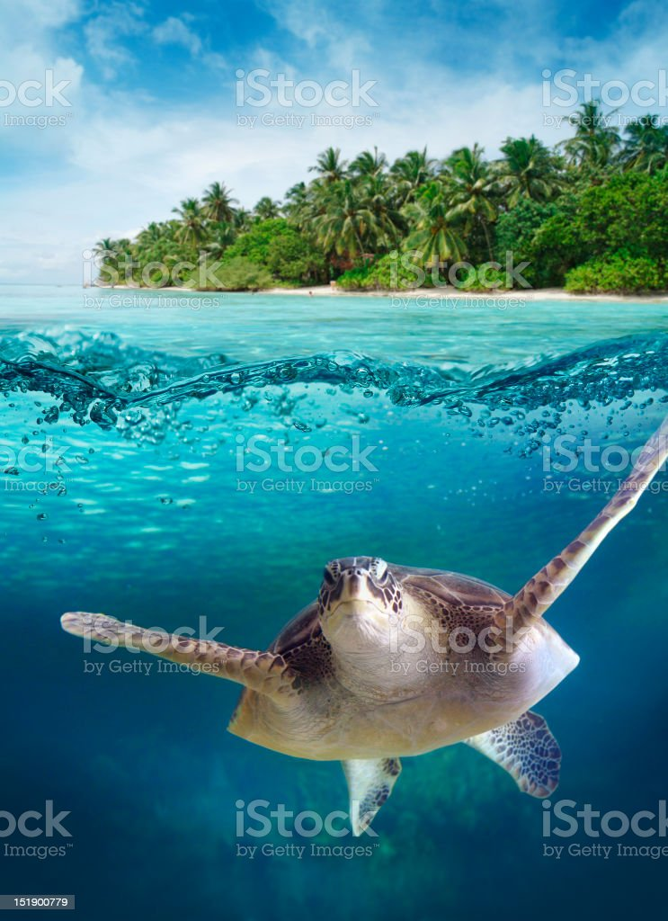 Big turtle floating in the sea stock photo