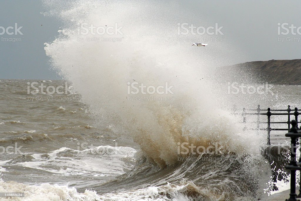 Big wave with seagull royalty-free stock photo