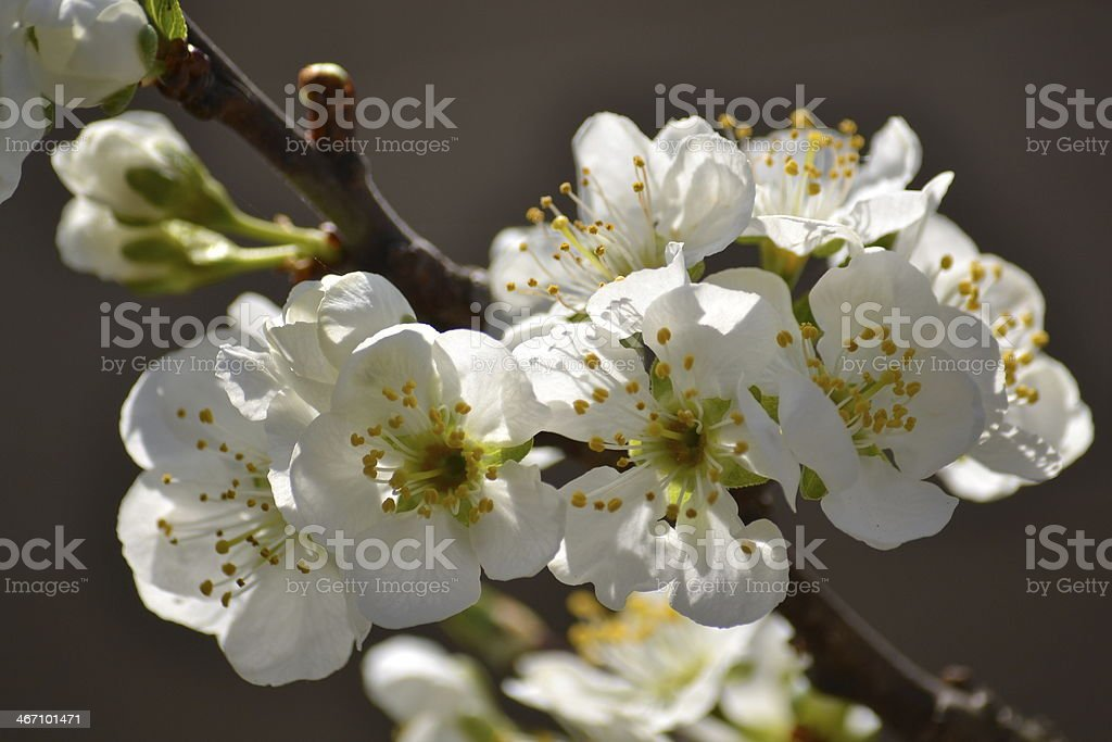 Big white flower stock photo