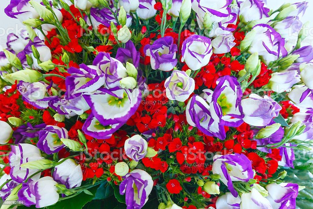 Big Wonderful Flowers Bouquet Royalty Free Stock Photo