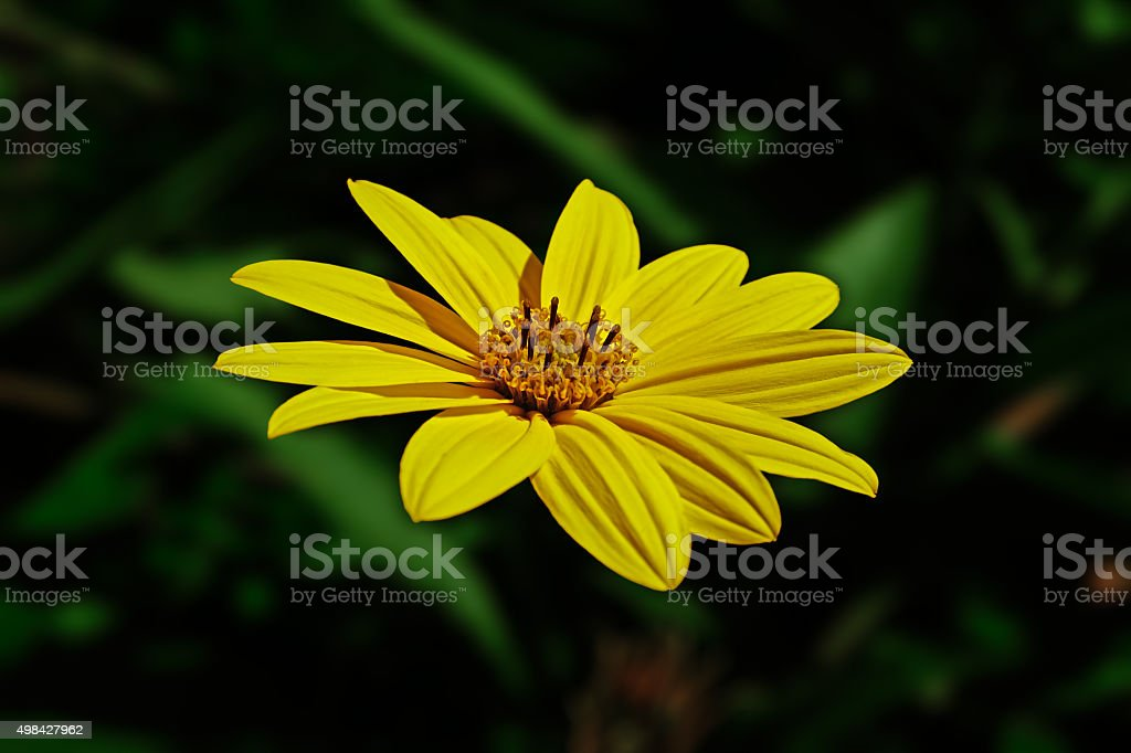big yellow flower royalty-free stock photo