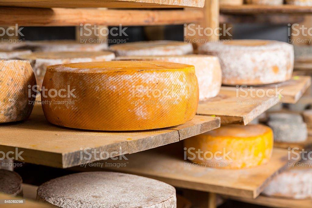 Big yellow goat cheese heads stock photo