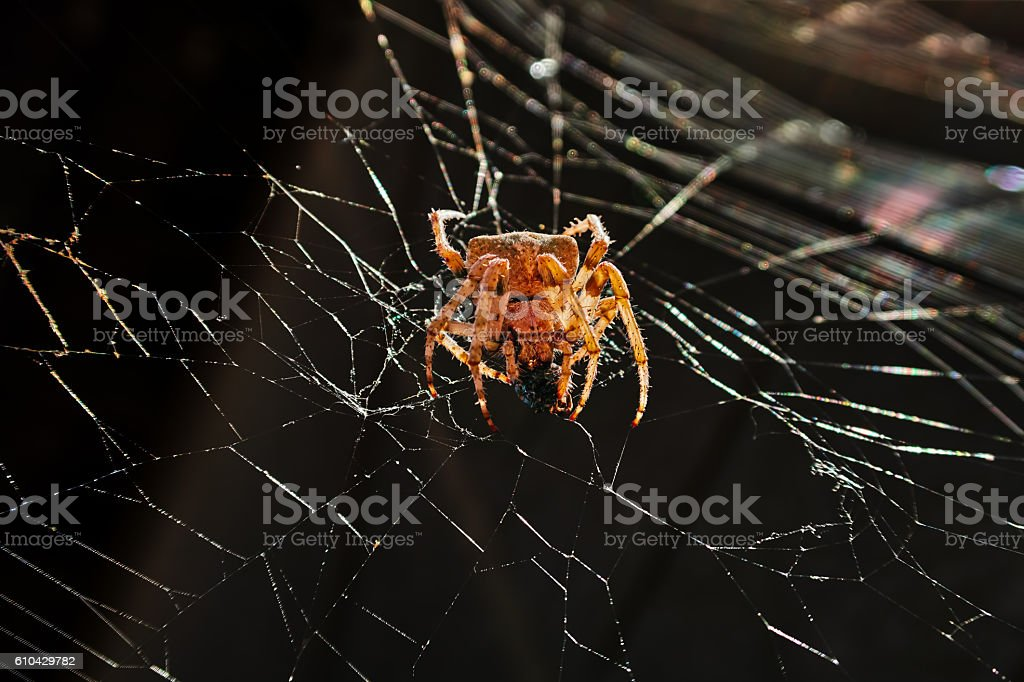 big yellow spider royalty-free stock photo