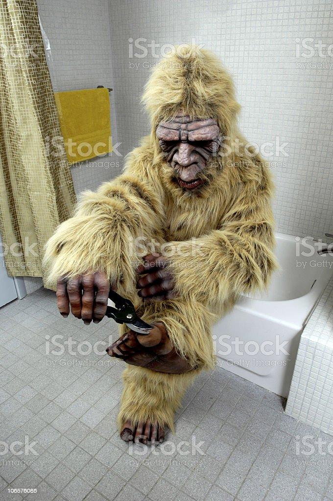 Bigfoot Clipping Her Toenails royalty-free stock photo