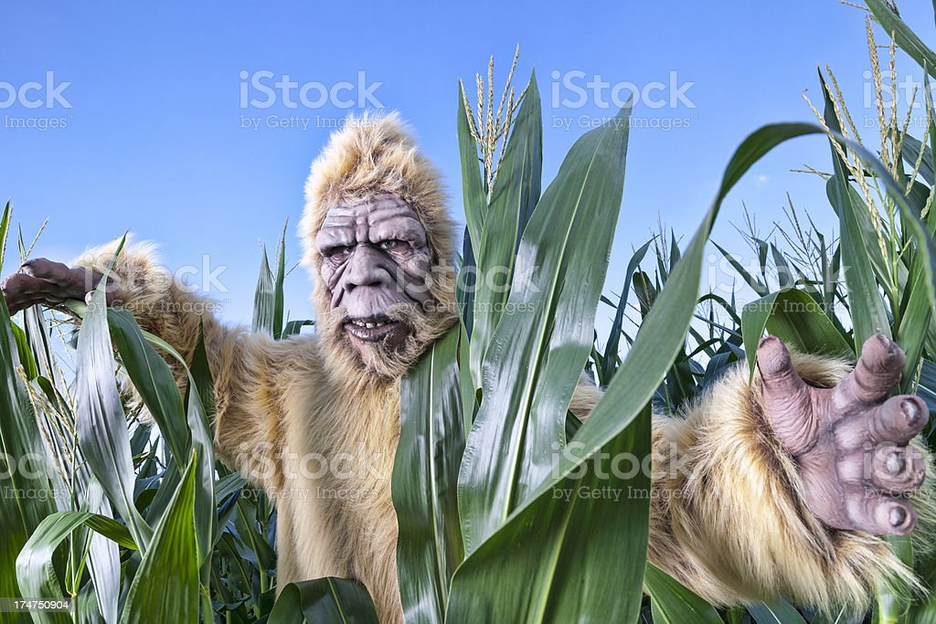 bigfoot corn stock photo