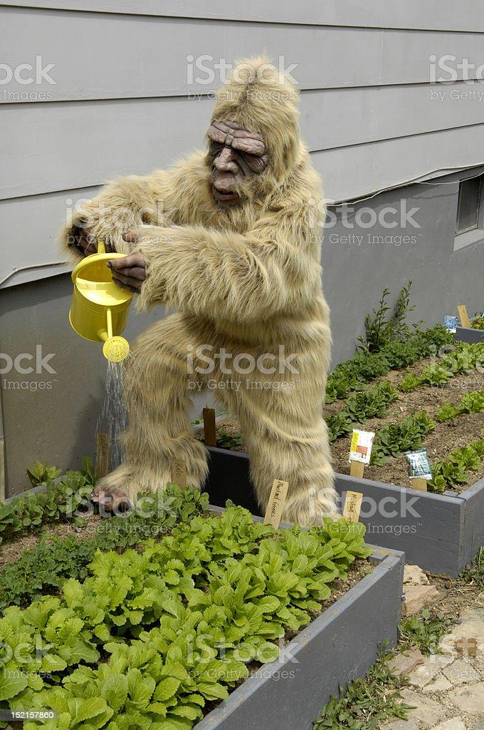 Bigfoot Gardening stock photo