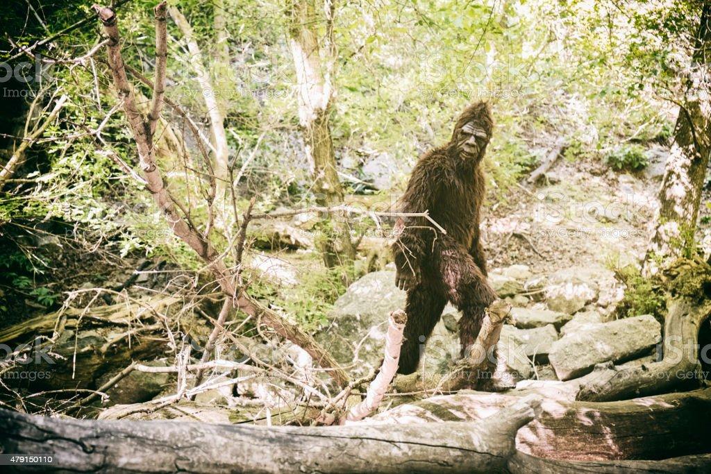 Bigfoot in WIld stock photo
