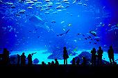 Biggest aquarium in the world. Atlanta, Georgia.