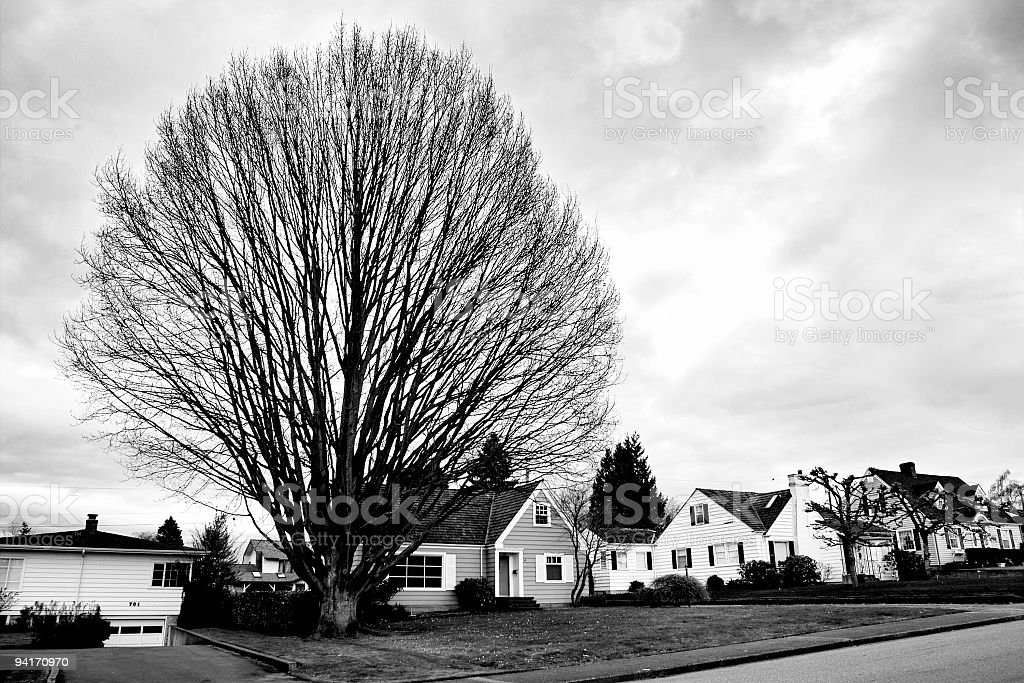 Biggest Tree on The Block royalty-free stock photo