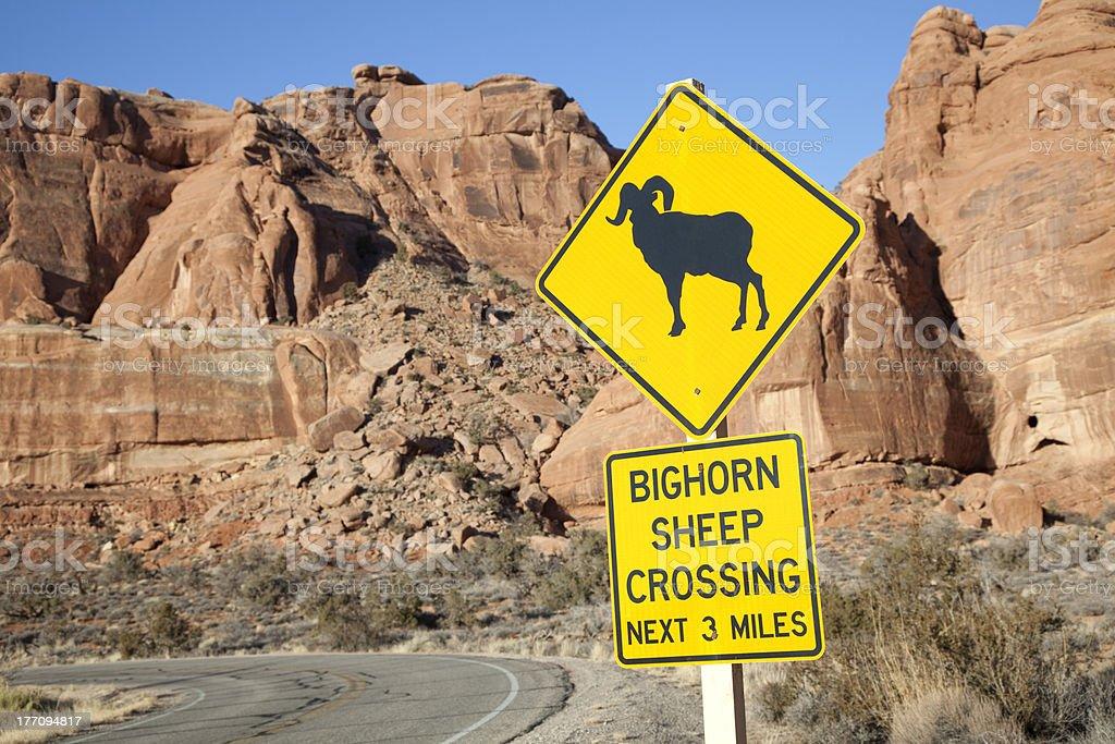 Bighorn Sheep Crossing stock photo