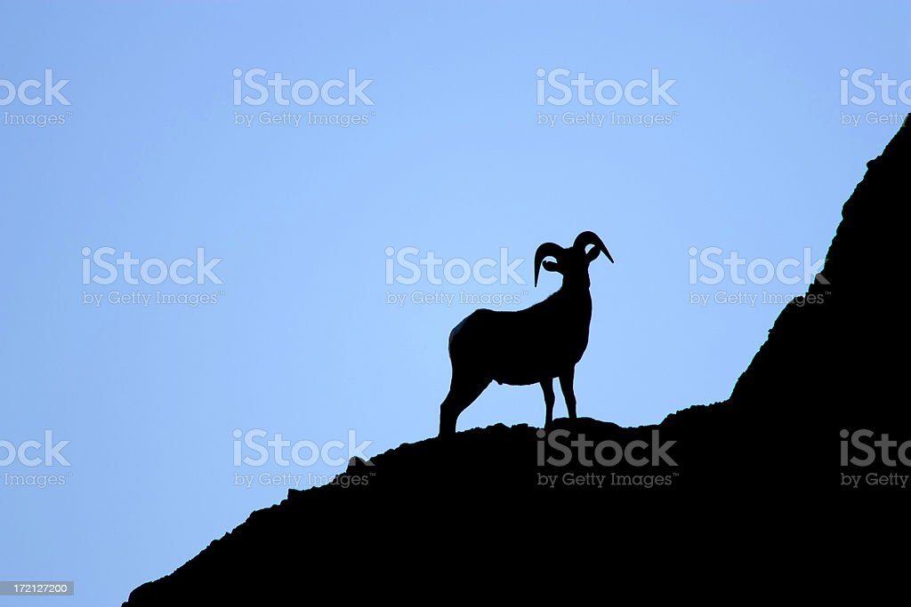 Bighorn Sheep in Silhouette II stock photo