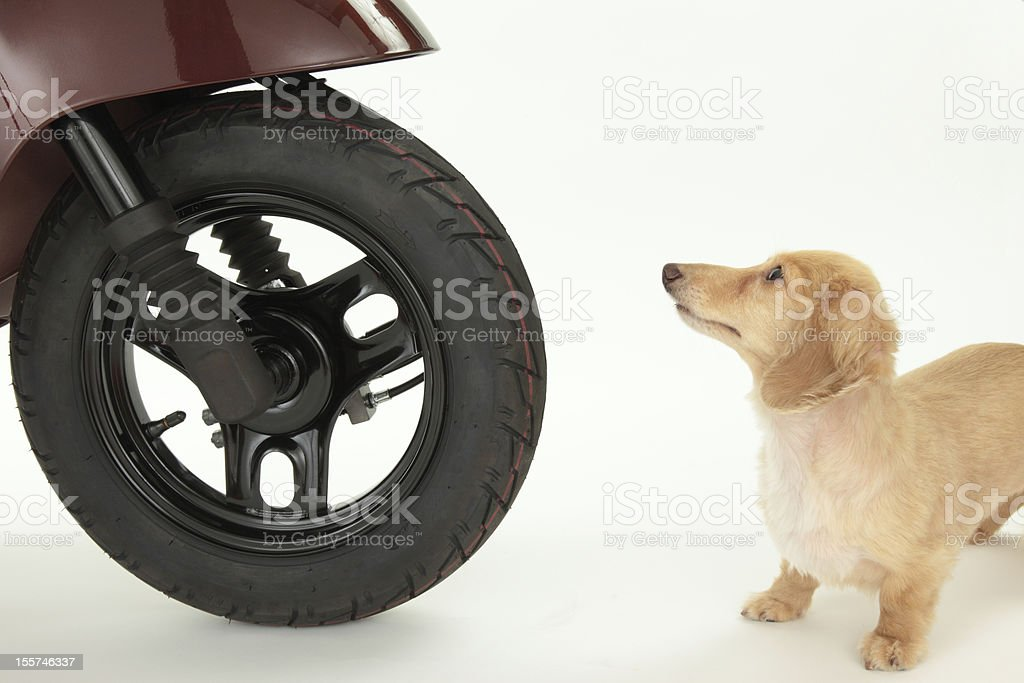 Bike and dog royalty-free stock photo
