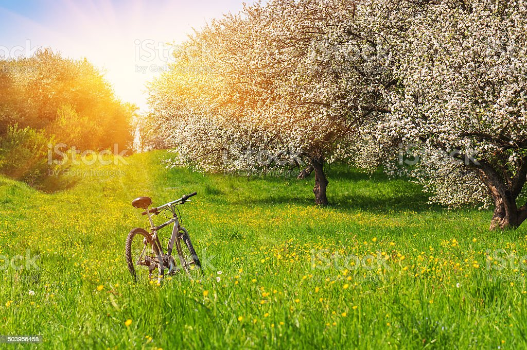 bike in a blossoming garden stock photo