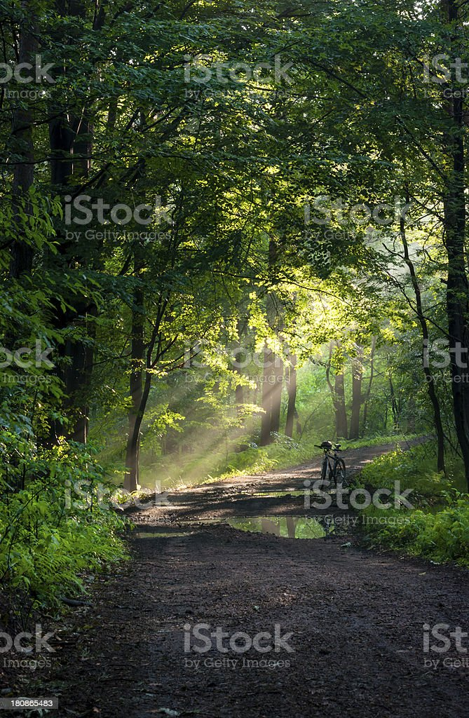bike in the forest - golden hour royalty-free stock photo