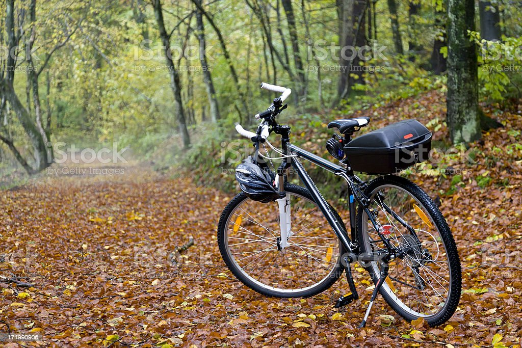 Bike in the forest stock photo