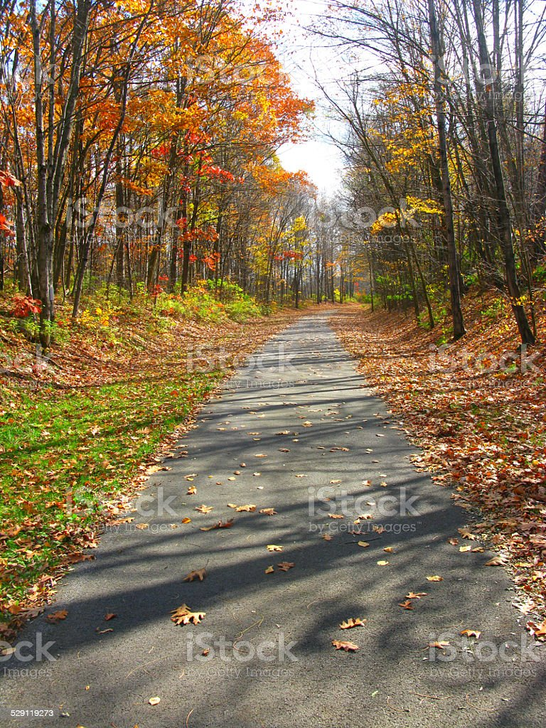 Bikepath in the Fall with Tree Shadows and Fallen Leaves stock photo