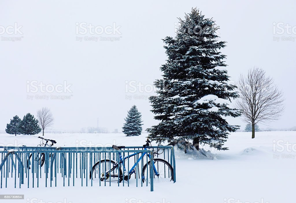 Bikes in snow with Pine trees, Winter scene stock photo