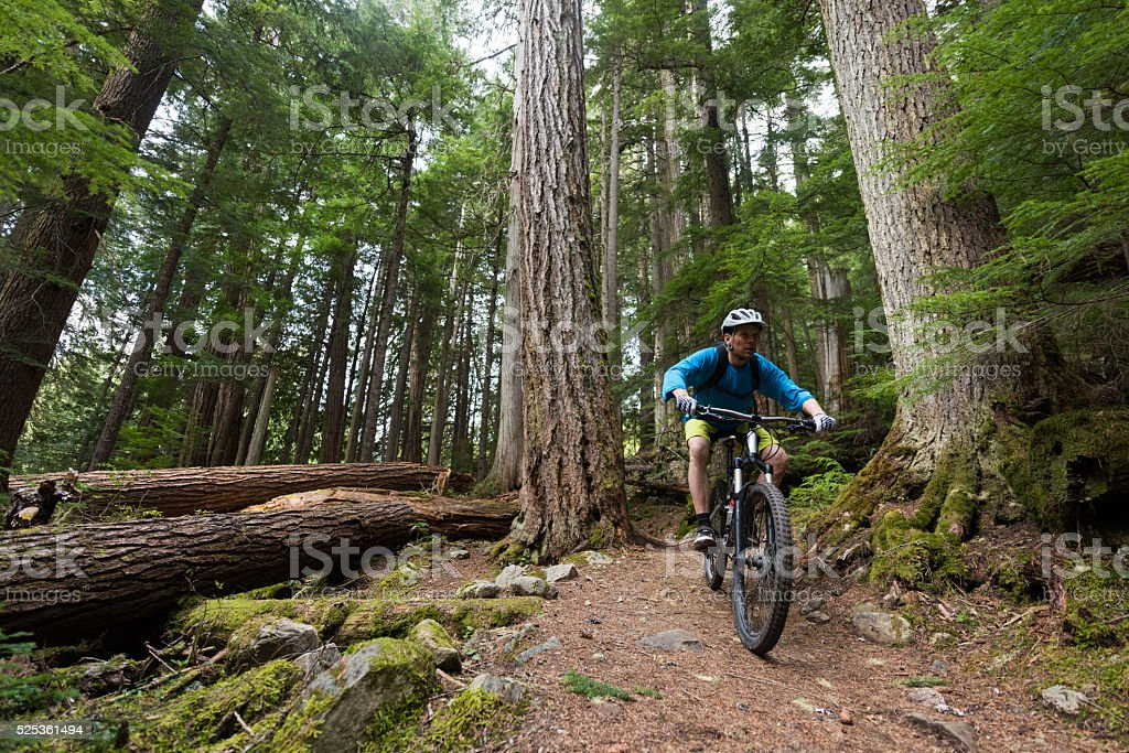 Biking in a pristine forest stock photo