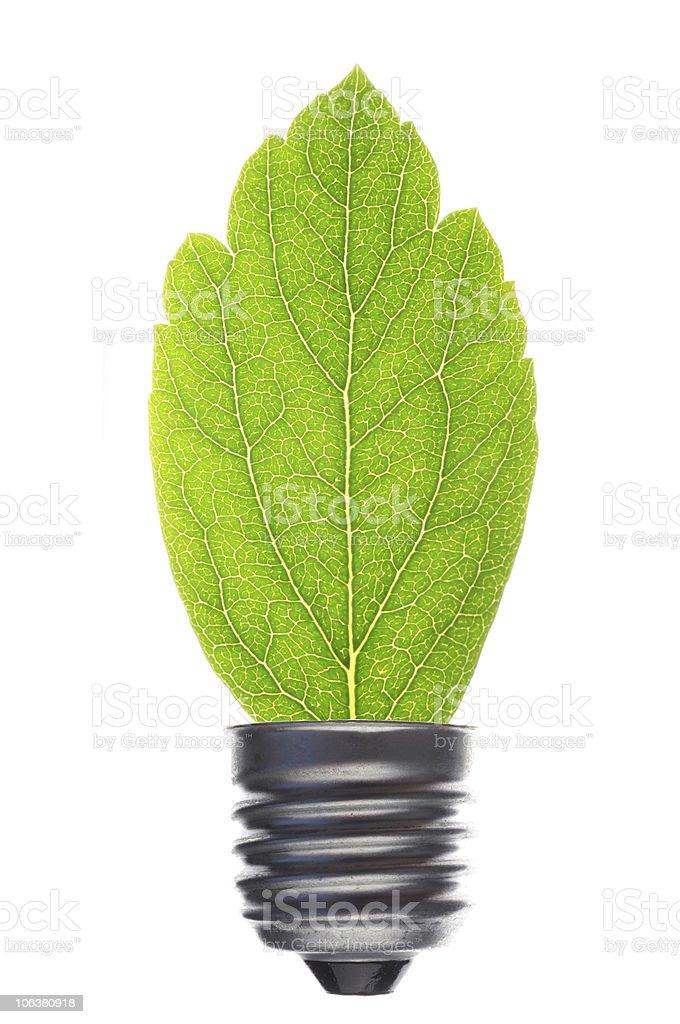 bilb an leaf stock photo