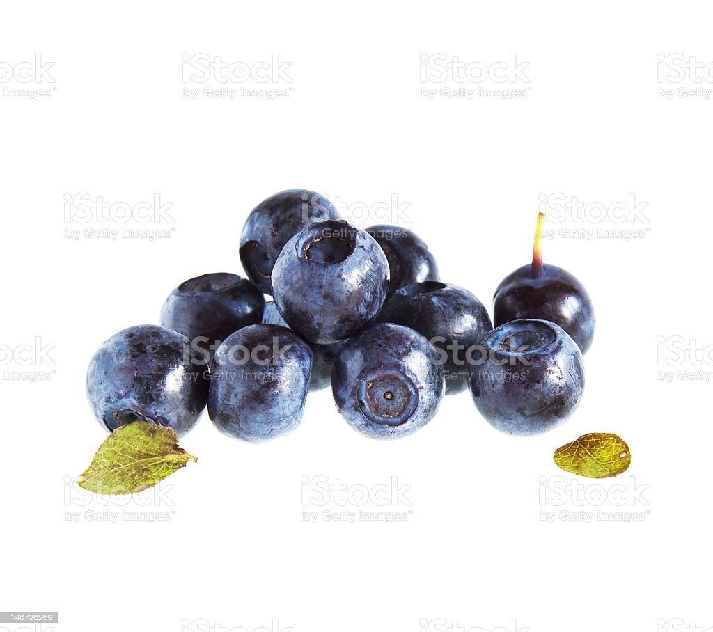 bilberries isolated royalty-free stock photo