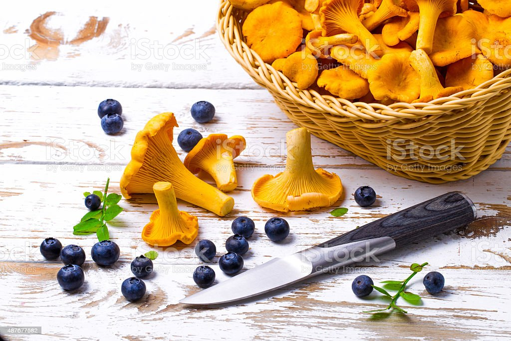 Bilberry and chanterelles and knife on a table stock photo