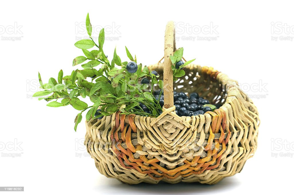 Bilberry in a basket royalty-free stock photo