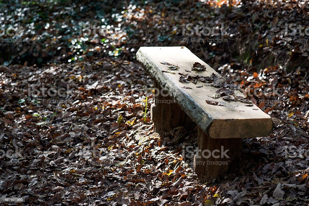 Billet Bench in Forest stock photo