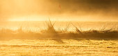 Billowing Fog across grasses at sunrise