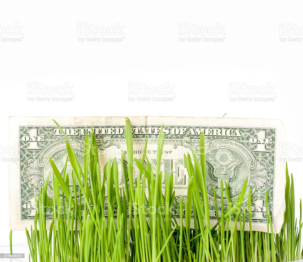 Bills in the green grass, finance concept. Growing money . The stock photo