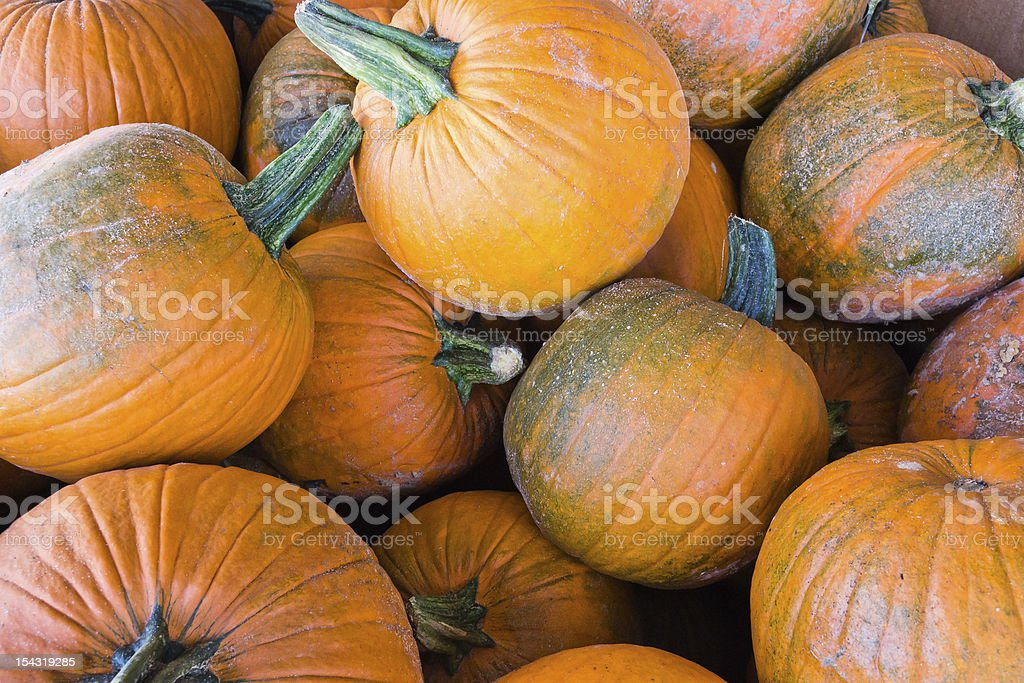 Bin with a pile of dirty orange pumpkins. royalty-free stock photo