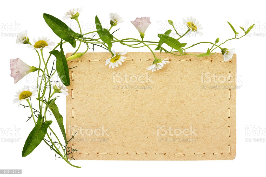 Bindweed and daisy flowers with card stock photo