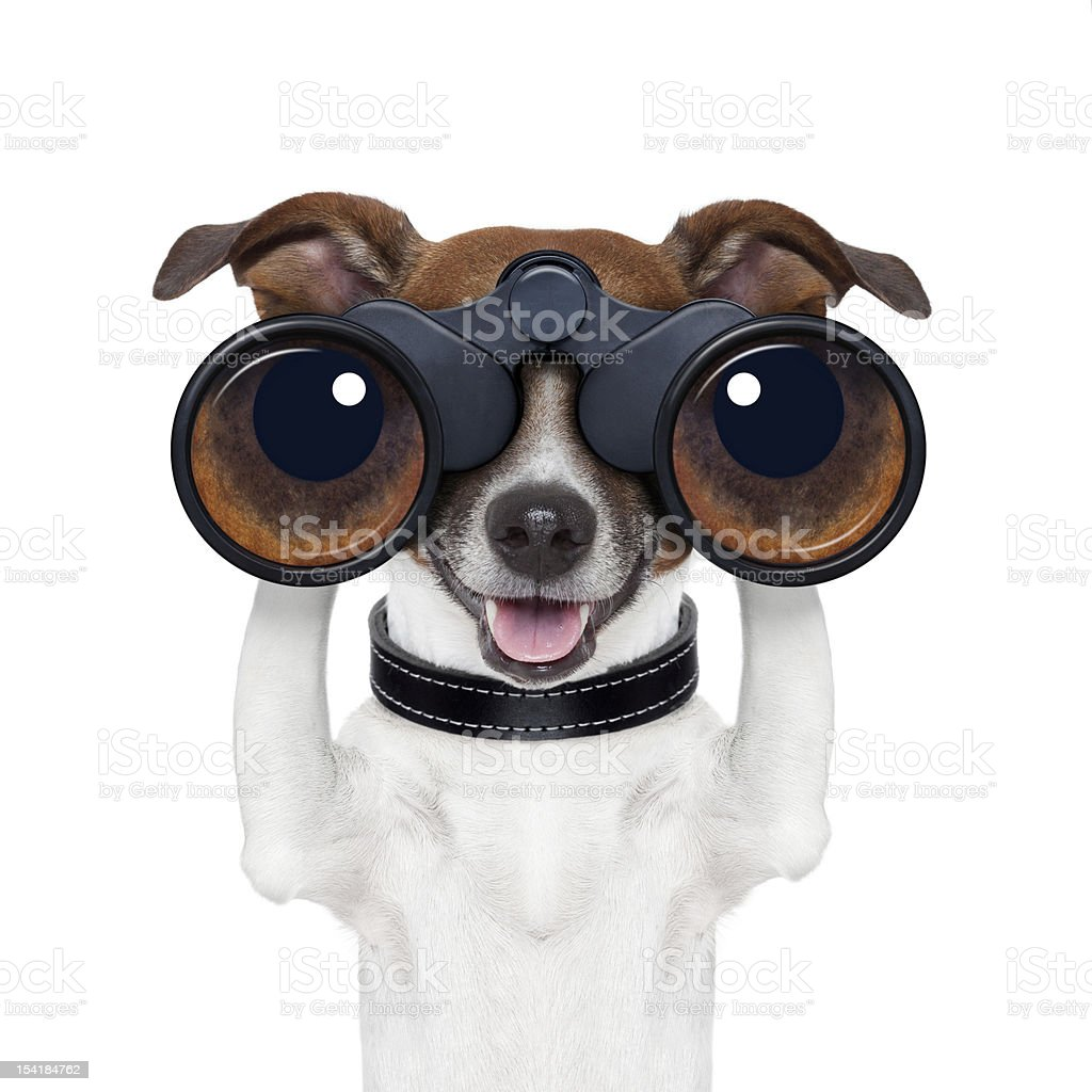 binoculars  searching looking observing  dog stock photo