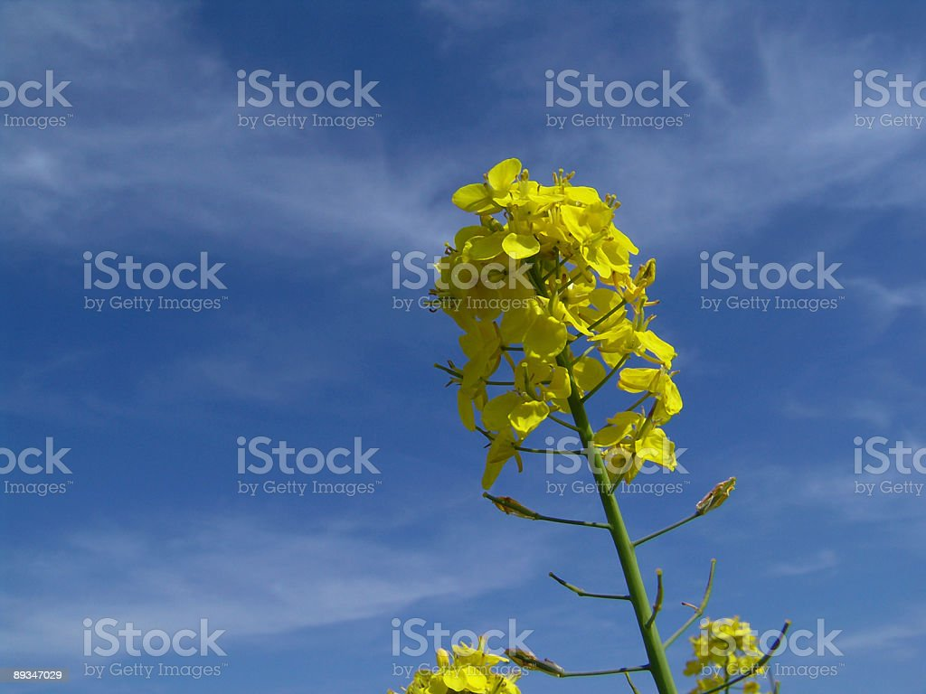 Bio fuel of the future royalty-free stock photo
