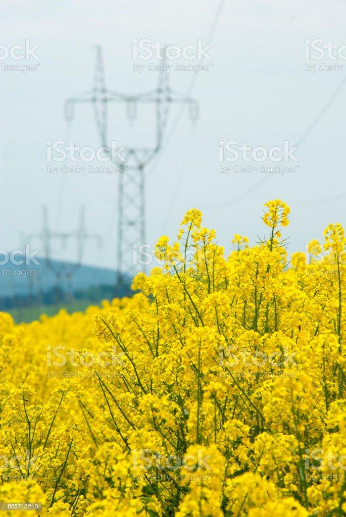 Bio fuel stock photo
