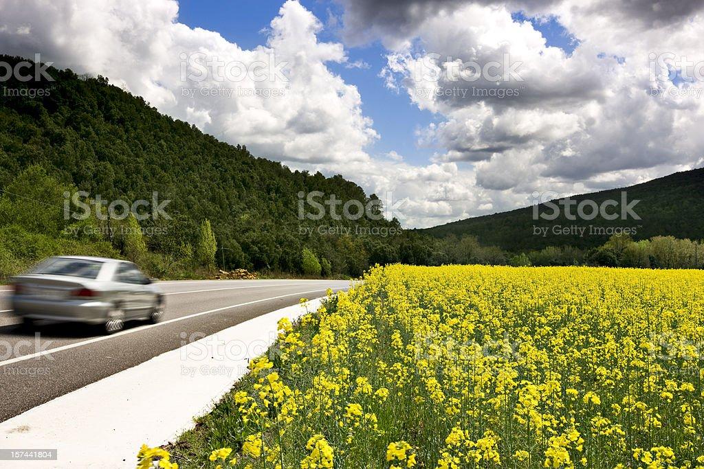 Bio oil royalty-free stock photo