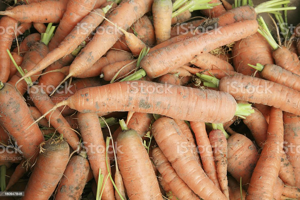 Bio, orange carrots royalty-free stock photo
