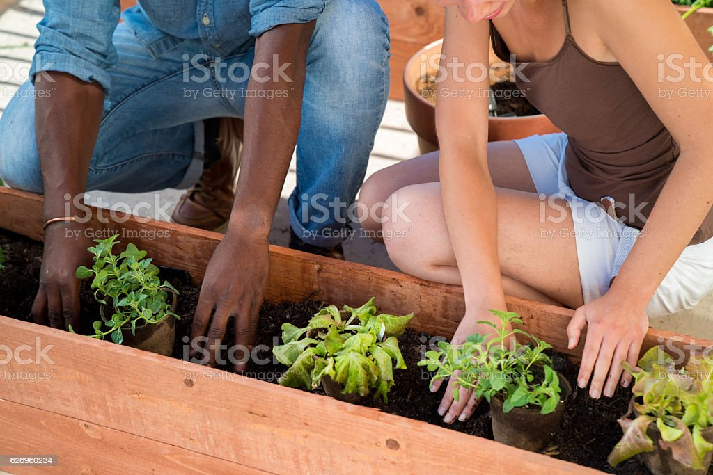 Biodegradable plant pots being placed in planter box stock photo