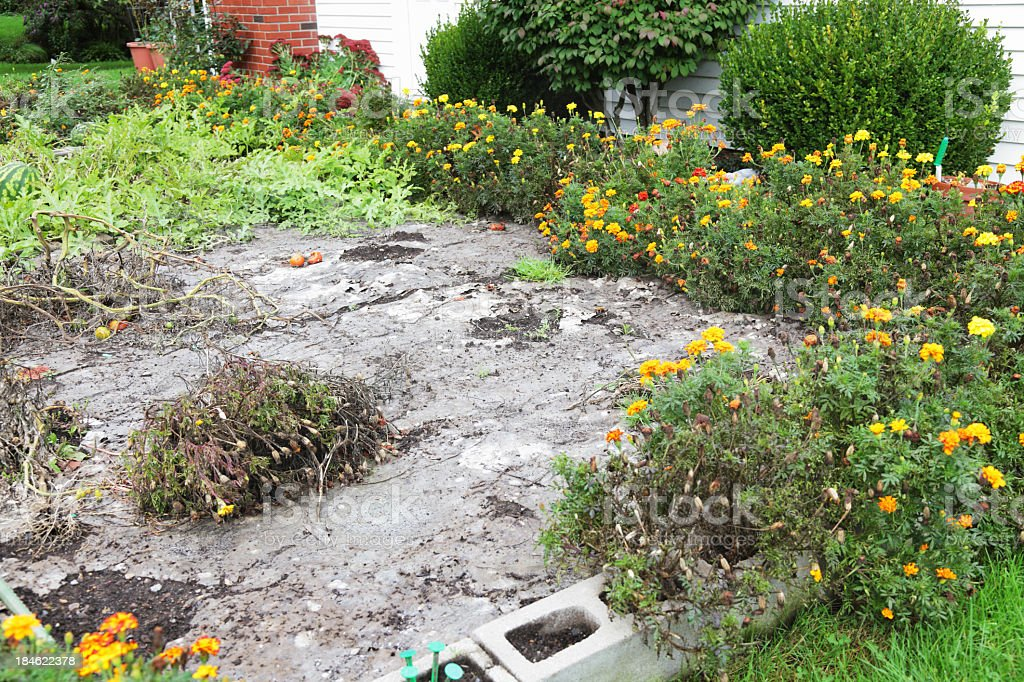 Biodegradable Recycled Paper Weed Prevention Layer Disintegrating in Autumn stock photo