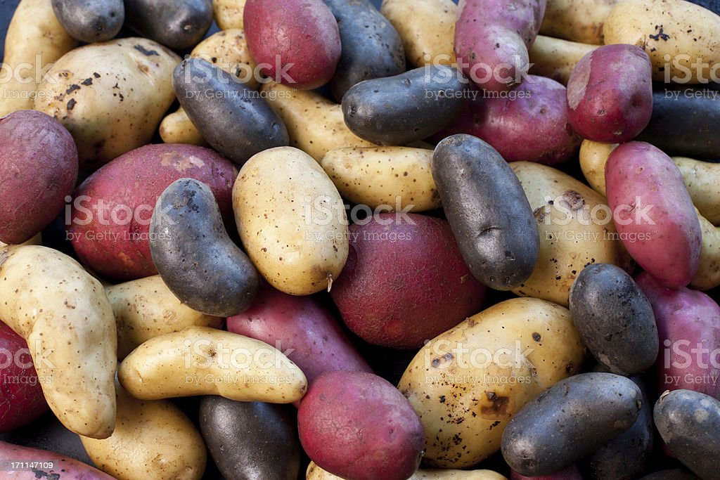 biodiversity - variety of potatoes stock photo