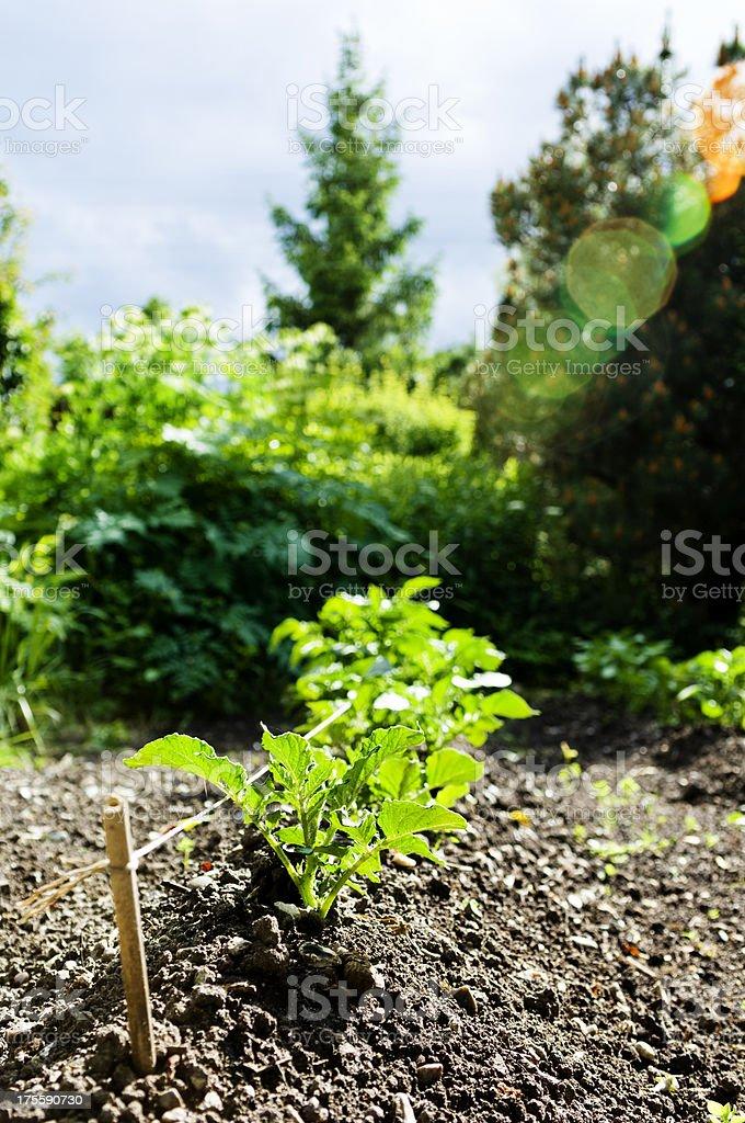 Biodynamic Vegetable Garden royalty-free stock photo
