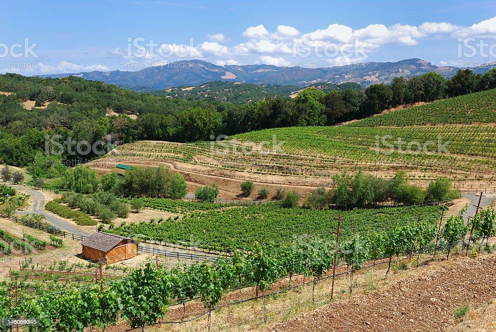 Biodynamic Vineyard in Sonoma stock photo