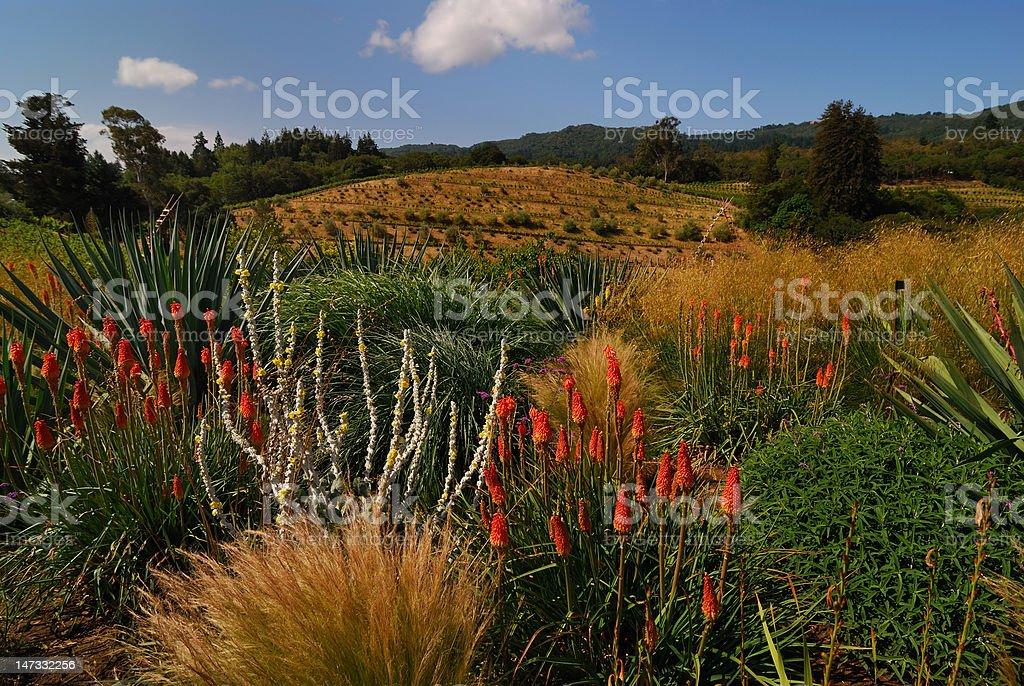 Biodynamic Vineyard stock photo
