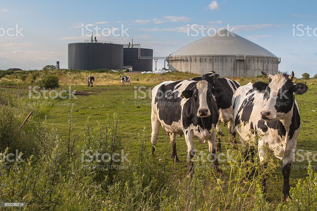 Biogas plant with Cows stock photo