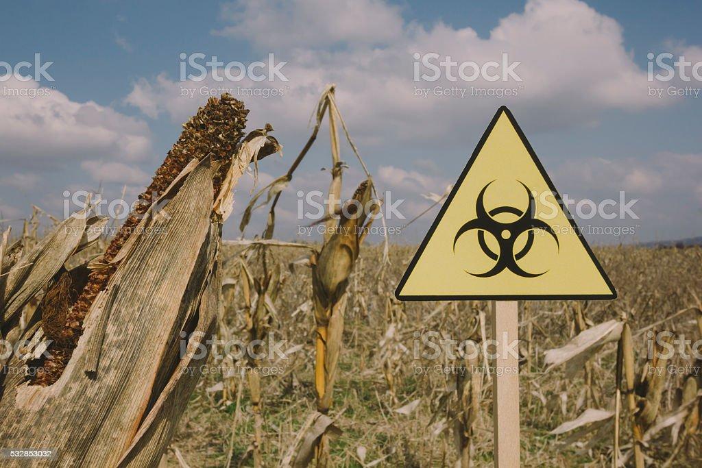 Biohazard sign on devastated corn field stock photo