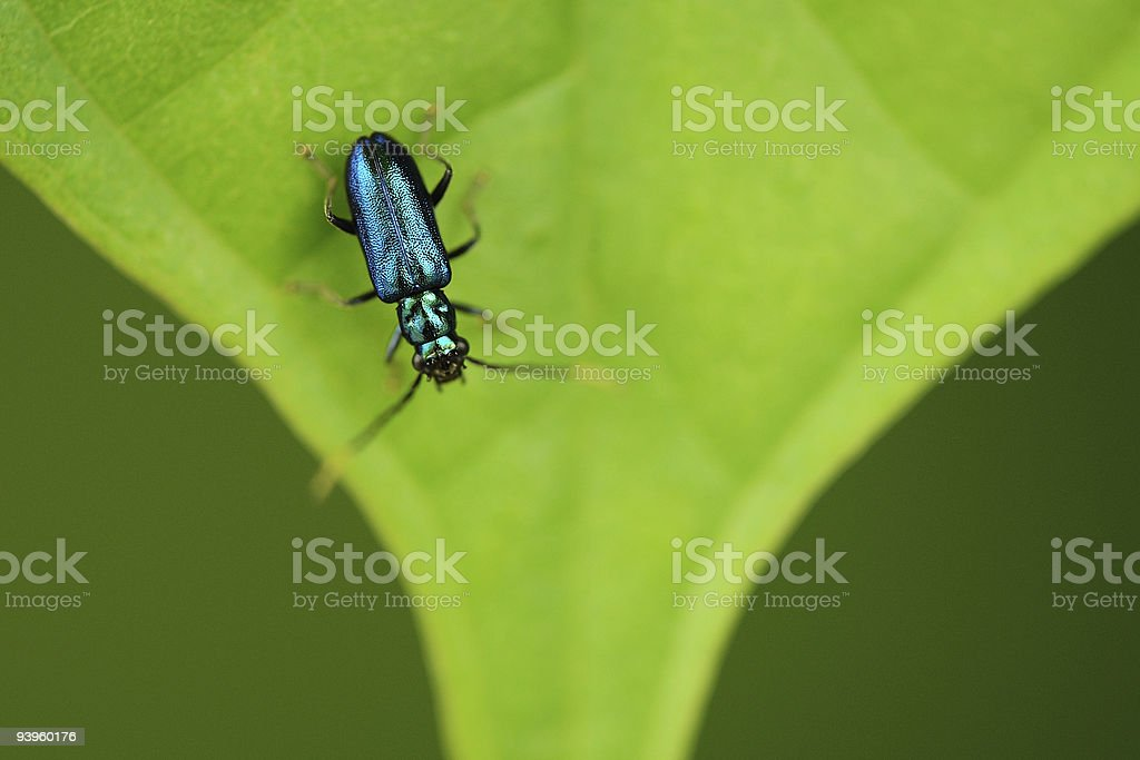 Biological Diversity royalty-free stock photo