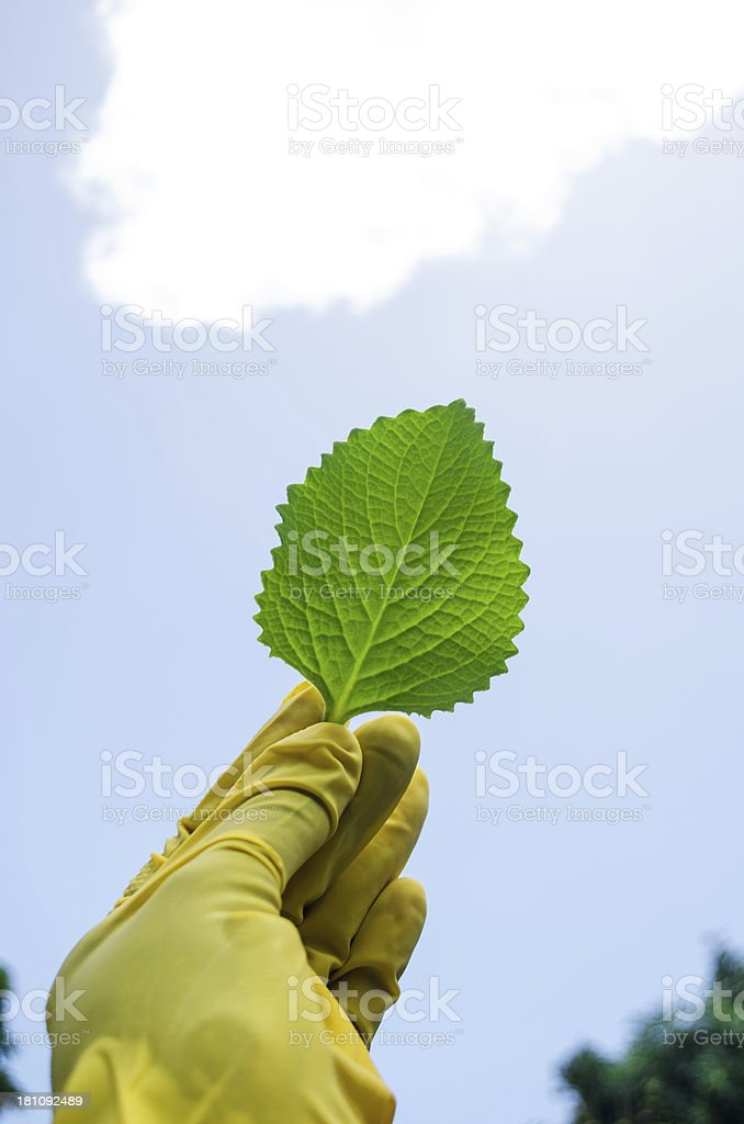 biological ecological occupation royalty-free stock photo