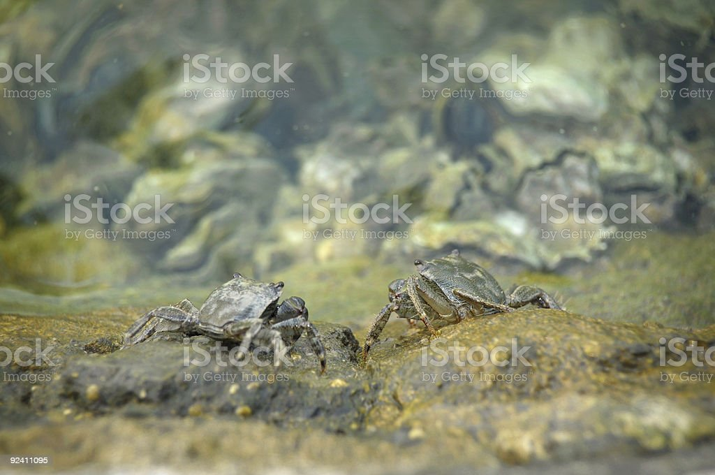 Biological mimicry stock photo