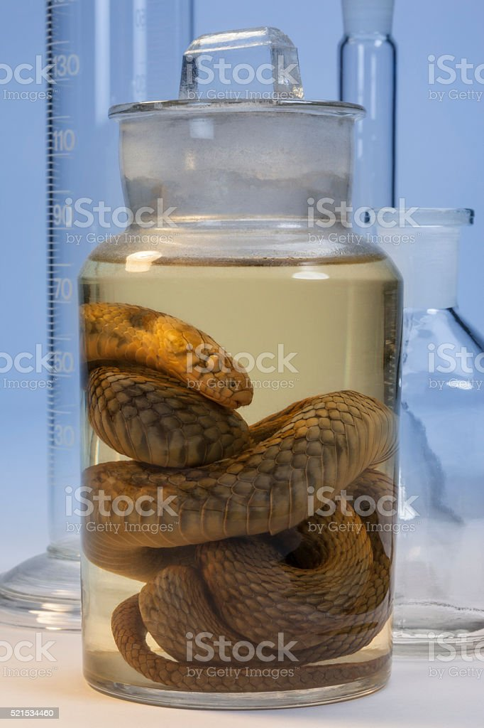 Biological Specimen stock photo