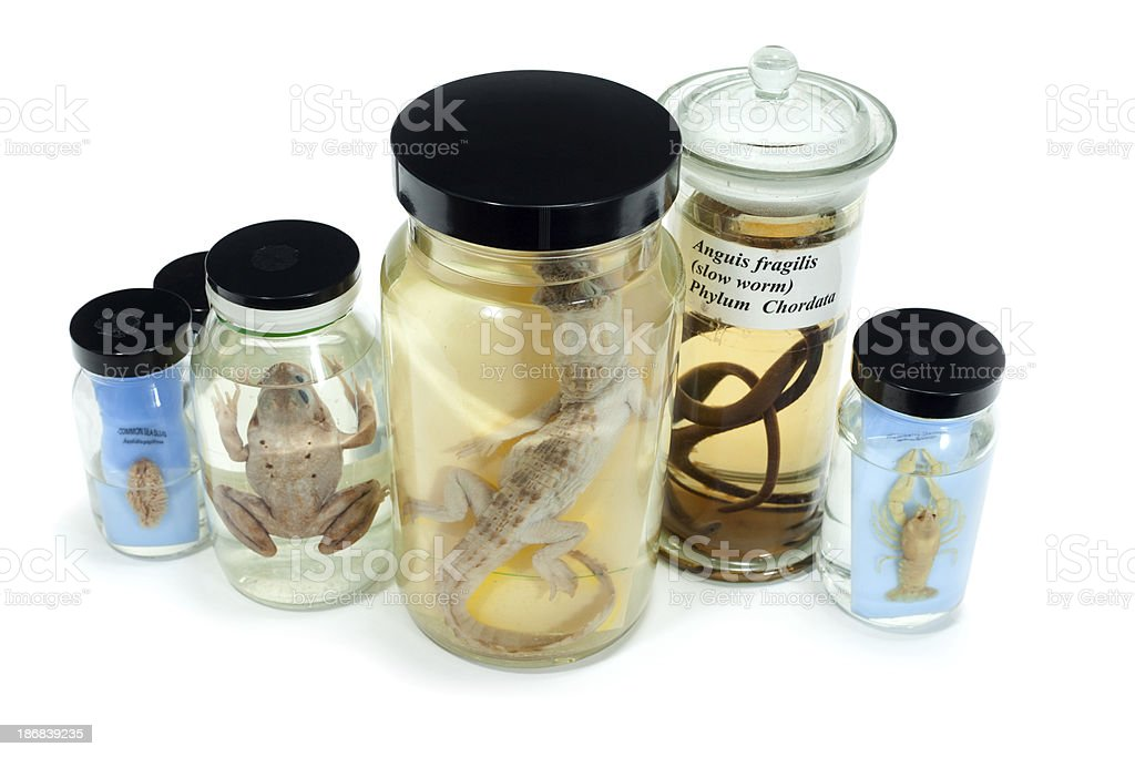 Biological specimens stock photo